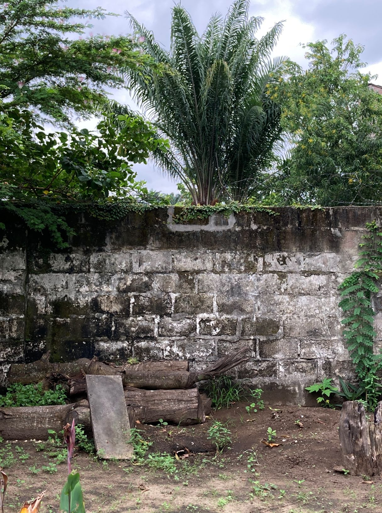 wall and foliage